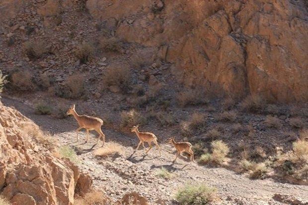 ۳.۲ درصد وسعت استان همدان منطقه حفاظت شده است