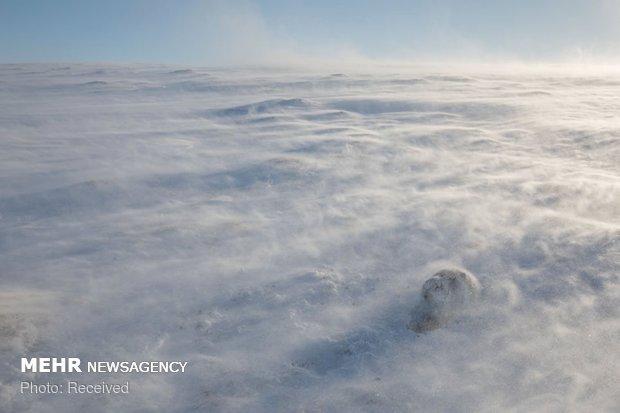 برندگان مسابقه عکاسی حیات وحش انگلیس