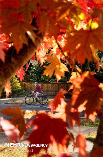 زیبایی های پاییز