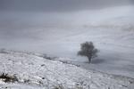 برف در ارتفاعات تهران/ بارندگی ادامه دارد