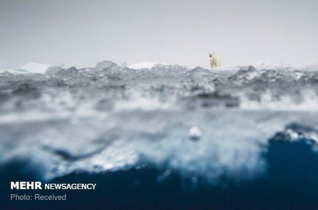برندگان مسابقه عکاسی طبیعت آلمان