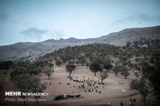 با نزدیک شدن به غروب آفتاب روستاییان از بیم تاریکی دام ها را جمع آوری می کنند