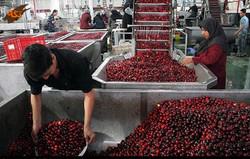 احداث ۱۱ واحد صنایع تبدیلی کشاورزی در کرمانشاه