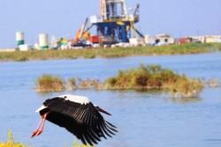 شرایط مطلوب تالاب های خوزستان فدای برداشتهای کشاورزی نمیشود