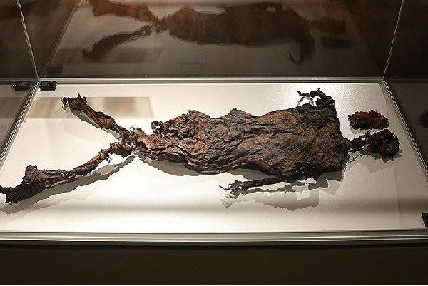 دستخط ونگوگ در موزه ملی/مومیایی با پوست و بدون استخوان