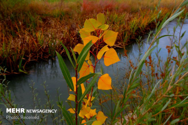 رنگ پاییز در کوچه باغ های بروجرد