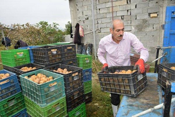 نیازی به واردات سیب و کیوی نداریم/صادرات کیوی ٢ برابر شد