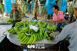 تصاویری جالب از مزرعه موز