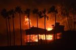 کیلی فورنیا کے جنگلات میں آتشزدگی کے باعث ہلاکتوں کی تعداد 31 تک پہنچ گئی