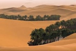 پوشش گیاهی بیابان لوت نیاز به حفاظت دارد