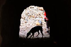 مانور مشترک سگهای آنست ایران و صلیب سرخ  آلمان