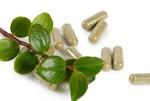 داروهای گیاهی کاهنده قند خون و وزن/ پانسمان طبیعی مرهم زخم تولید شد