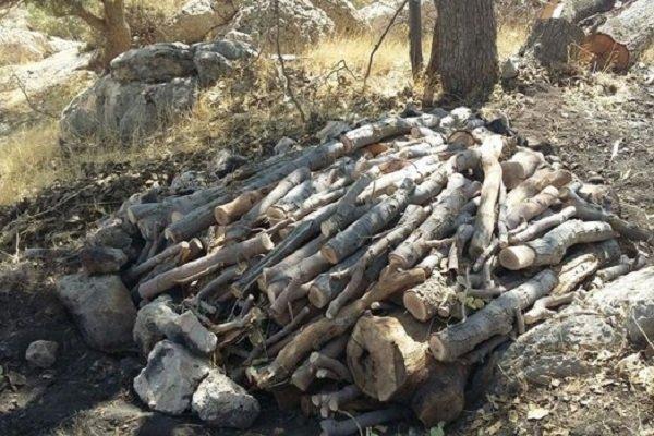 دستگیری عامل اصلی تهیه زغال بلوط در پلدختر
