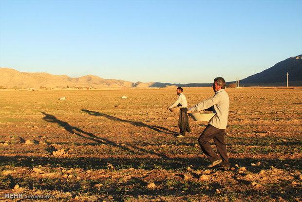 همایش استانی کشت محصولات پاییزه در ساری آغاز شد