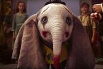 دامبو آماده پرواز است/ آخرین اطلاعات از خاصترین فیل دنیا