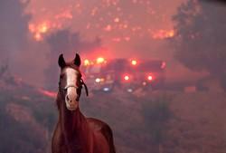 ریاست کیلیفورنیا کے جنگلات میں لگنے والی گ سے ہلاکتوں کی تعداد 71 ہوگئی