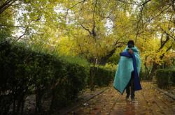 طراوت باران در تهران
