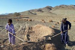 اجرای ۷۷۰ هکتار عملیات بیولوژیک و اصلاح مراتع در سیستان وبلوچستان