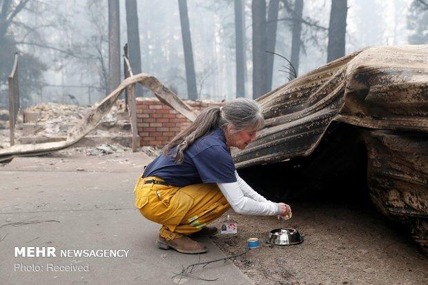 نجات حیوانات از جهنم کالیفرنیا