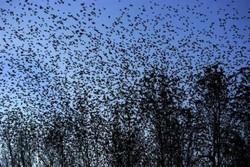 شبکه اینترنت «۵جی» عامل احتمالی مرگ پرندگان در هلند