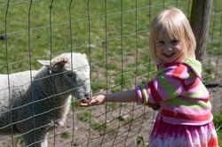 کاهش احتمال آسم کودکان با زندگی در مزرعه