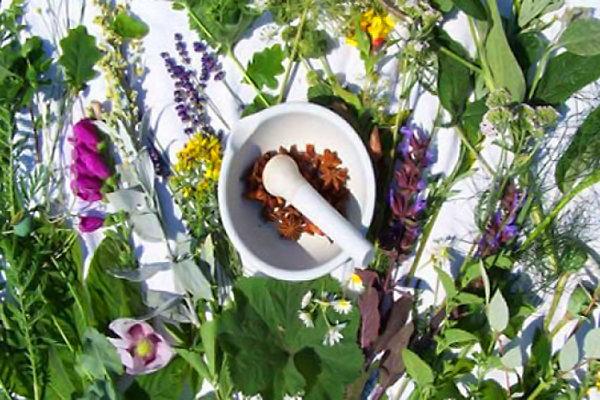 آذربایجان غربی رتبه اول تنوع گیاهان دارویی کشور را داراست