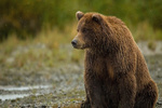VIDEO: Brown bear spotted in Savadkuh heights
