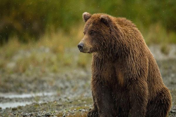 کشف لاشه خرس قهوه ای در نزدیکی ظلع شمالی منطقه حفاظت شده دنا
