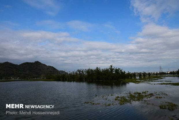طبیعت پاییزی تالاب استیل شهرستان مرزی آستارا