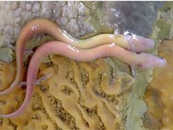 اشتباهات متعدد در خبر انقراض پروتیوس در غار قوریقلعه