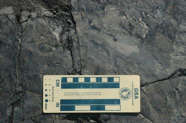 کوچکترین ردپای دایناسور دنیا کشف شد