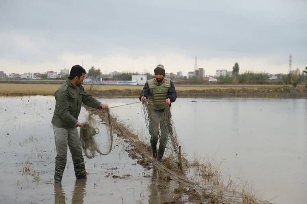 Illegal bird traps identified, destroyed in northern Iran