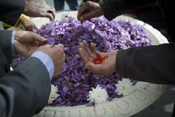 Saffron festival in Khomein
