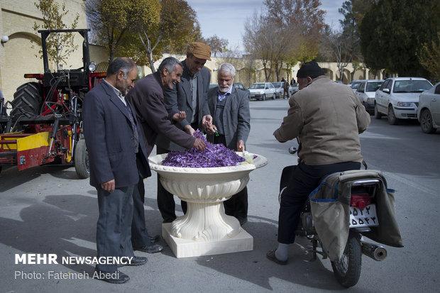 Saffron festival in Khomeyn