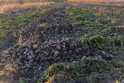 ضرورت توسعه کشت نشایی در تولید محصولات کشاورزی