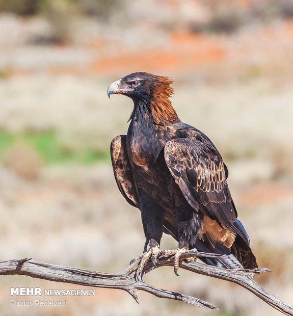 دنیای عقاب ها