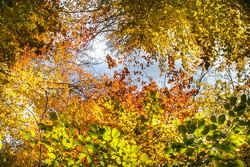 سحر ألوان فصل الخريف في خراسان الشمالية/صور
