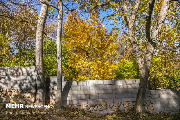 North Khorasan woods immersed in colorful autumn leaves