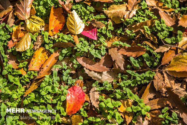 فصل رنگ ها