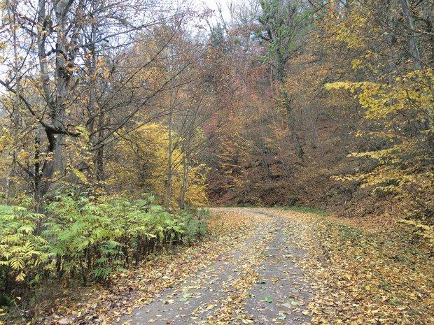 مناقصه حفاظت از جنگلهای هیرکانی امسال برگزار میشود