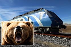 خرس هم به لیست قربانیان تصادفات پیوست/عمران باچاشنی تخریب زیستگاه