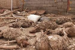 اقدامی برای جمعآوری لاشه احشام تلفشده در سیلاب پلدختر نشده است