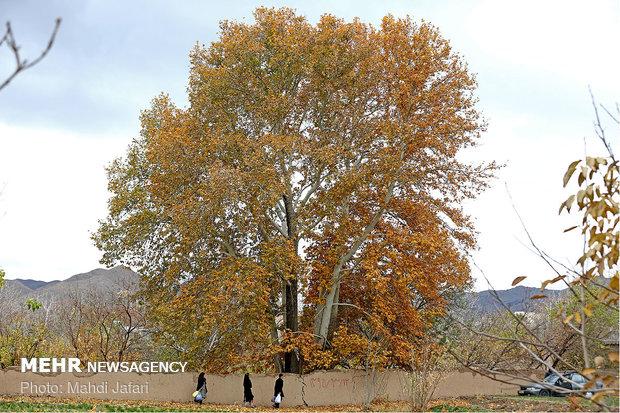 سمفونی رنگ پاییز در نطنز