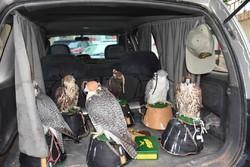 شکارچی غیرمجاز از اتباع خارجی در خوزستان دستگیر شدند