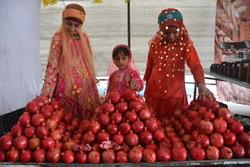 İran'ın Şahrıza bölgesinde nar hasadı başladı