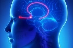 بازگشت حس بویایی با کاشت الکترود در بینی