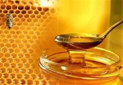 طرح تولید عسل در امامزاده احمد (ع) نطنز اجرایی شد