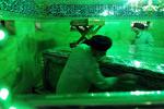 حضرت معصومہ (س) کی ضریح مبارک سے غبار صاف کرنے کی تقریب منعقد