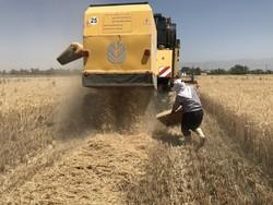 ضایعات محصولات کشاورزی در کرمانشاه ۳ درصد است