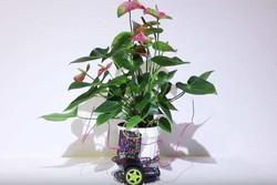 گیاه سایبرنتیکی که مانند خودرو حرکت می کند!
